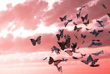 Leppikset ja perhoset