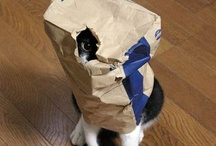 Spy Cats / Cats being sneaky. / by charley mccoy