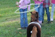 Pferdegeburtstag