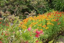 NT Coleton Fishacre Summer Moods / A classic Arts & Crafts House & Garden in a stunning coastal location in Devon.