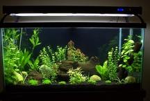 aquarium black background