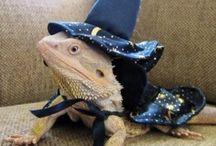 Cool reptiles