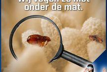 Vlooien / Vlooien in huis zijn een heus probleem! Lees alles over vlooien voorkomen en bestrijden op http://bit.ly/vlooienbestrijding