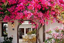 Flower home idea