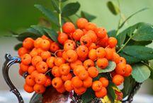 Jarzębina czerwona.....i inne owoce / Czerwone owoce jarzębiny... zawsze robiły na mnie wrażenie.I wszelkie owoce, kolorowe, soczyste, pyszne - Uwielbiam.
