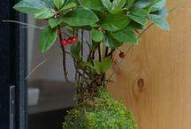 Floristik/Outdoor/Indoor / Florales #flowers #schönees