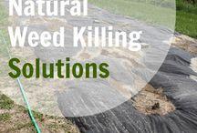 Natural Weed Killing Solutions
