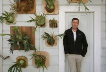 "Staghorn Fern Display Examples / This board is to share examples of how staghorn ferns are displayed as part of our ""Botanical Living Wall Art"" workshops being held in S. Windsor, E. Windsor, CT. See workshopsct.com for all the details - First dates are March 2017."