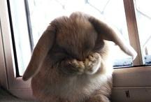 Cute - Rabbits / by Darlene Chidgey