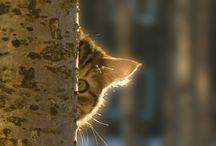 The cat so cute ❤