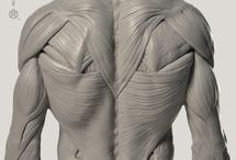 Anatomia general