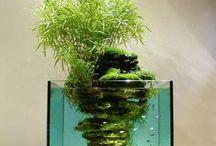 Cool Aquariums