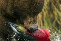 Grizzly bear please freeze