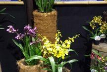 flora winterfair 2014 bloeiende kamer planten