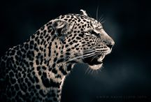 Animals-Cooler Than People:) / by Julia Magier Sepinski