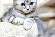 Littel Cat
