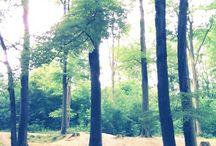 Essen Margarethenhöhe / Wald