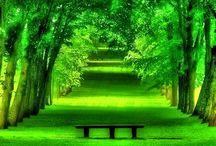 J A R D I N • Down The Garden Path