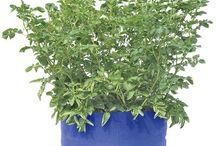 ZAHRADA / Barevné Jumbo Bramborové Grow Bag. I použít tyto tašky v mé zahradě a oni jsou ty nejlepší věci. Můžete pěstovat zdravé rostliny.