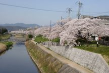 これからの京都 / 京都と言えば、桜が有名です。昨年までの、京都の桜の写真を上げて行きます。
