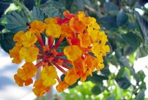 Flora / null