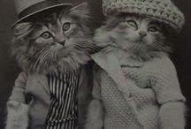 Nostalgia cats
