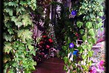 Secret Garden / My perfect garden ideas. / by Michelle Ward