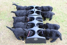 animali cuccioli