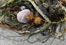 Beach art on Flores Island, BC / A small selection of beach art created by the action of the waves on the beaches of Flores Island off Vancouver Island in beautiful British Columbia (Canada).