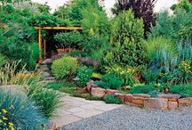 Drought Tolerant Landscaping / Ideas for Drought Tolerant Landscaping - California needs to be Water Wise!
