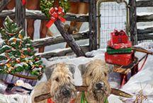 Irish soft Wheten Terrier