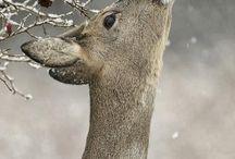 Téli állatkák