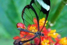 Artwork: Flowers & Butterflies