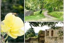 Beautés Sundgauviennes / Découvrez tout ce que le Sundgau, petite région du sud de l'Alsace, peut vous offrir !
