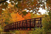 bridges / by Ron Moyers