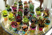 jardinagem / plantas de casa e decoração