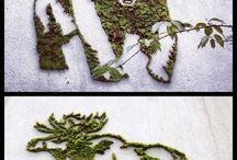 Green / Jardin