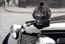 Hood Ornaments / At Kawaii Animals we love all animals. Check out our fabulous range of animal themed toys and gifts on our website www.kawaiianimals.com