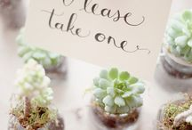 Eco-Friendly Wedding Favors