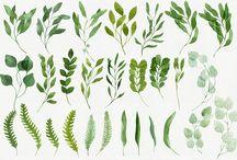 Watercolor : Leaves