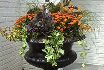 Fall outdoor arrangements