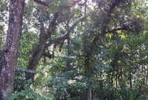 Edayaranmula, Kerala / The land of my forefathers.