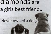 pet quotes we love / pet quotes we love