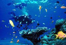 Costa Rica / Un viaje para conocer auténtica naturaleza combinado con fascinantes playas. Los viajes a Costa Rica te llevan mediante excursiones a descubrir Parques Nacionales con una biodiversidad única, acabando en idílicas playas del Caribe o probar las aguas del océano Pacífico.