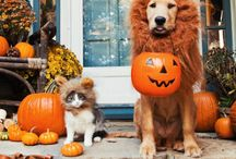 Halloween with pets!