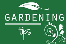 """GARDENING: Tips"" / Gardening Ideas from Pinterest / by Wanna Bite"