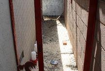 Backyard Chickens, Urban Chickens / raising chickens in urban setting, raising chickens in the city #chickens #backyardchickens