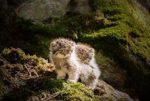 nástěnka-zvířátka / tato nástěnka se týká roztomilích zvířátek