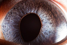"""Los ojos de Suren Manvelyan / Suren Manvelyan (1976) es un fotógrafo profesional armenio que se especializa en los ojos animales, los ojos humanos, la fotografía macro, el paisaje, el retrato y las fotos nocturnas. Su popular última serie de primeros planos de un ojo humano, titulada """"Your Beautiful Eyes"""", junto con una serie similar, """"Animal eyes"""", han tenido millones de visitas en su web."""