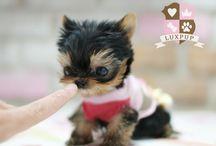 cuteness overload! / by Breanna Pate